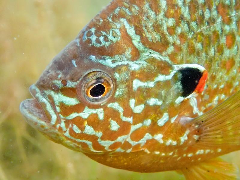sunfish9 (1 of 1).jpg
