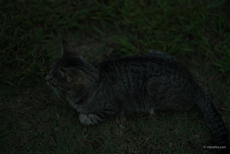 Pets-53.jpg