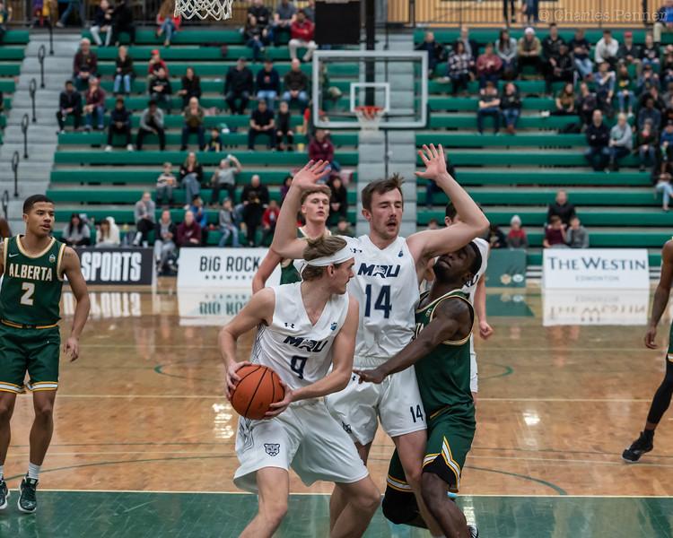 Basketball UofA Bears vs MRU Cougars