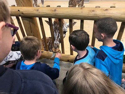 Meadow Lane first-grader finally meets Phoebe, the giraffe he named