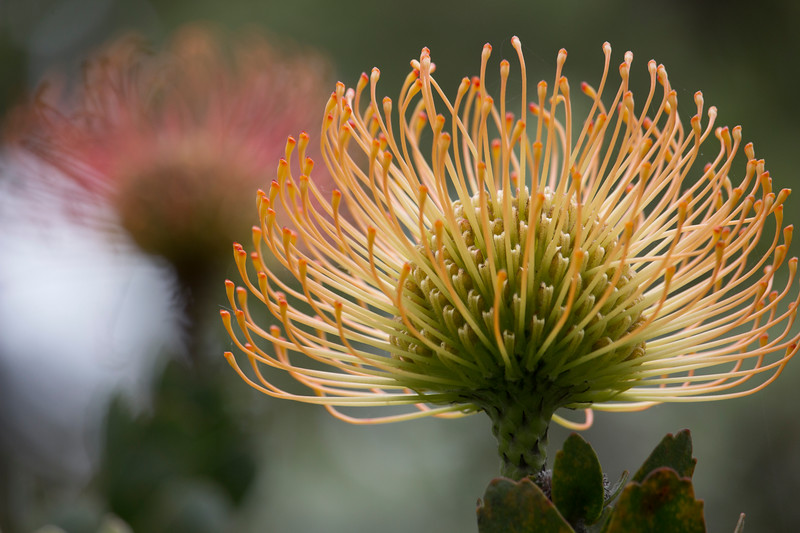KoRedfield-Floral64.jpg
