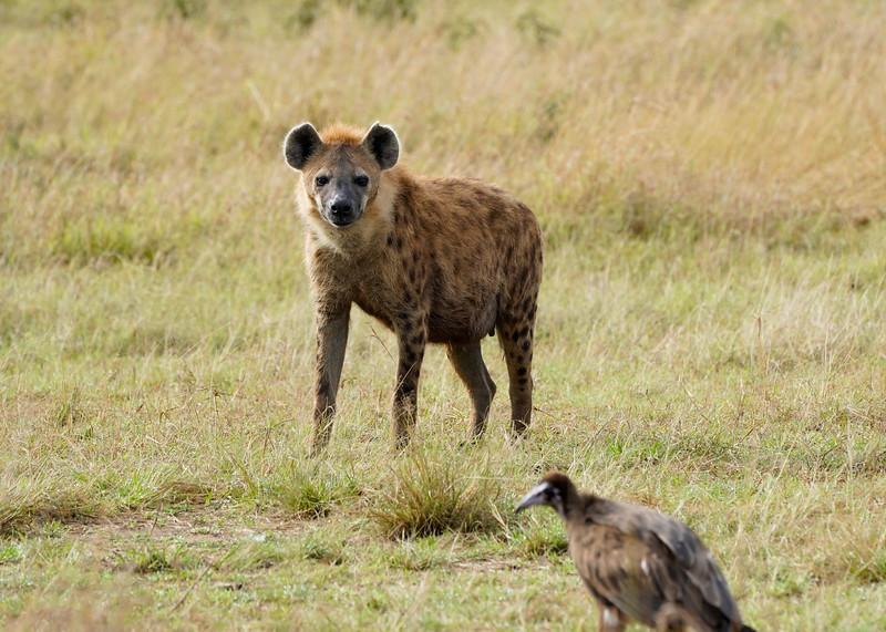 safari-2018-123.jpg