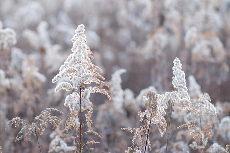 white-autumn-II_FC.jpg