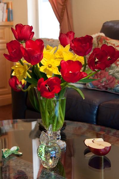 *Tulips & DaffysApril2011.jpg