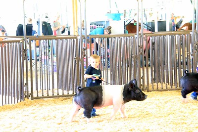 Pee Wee Swine Showmanship Sunday