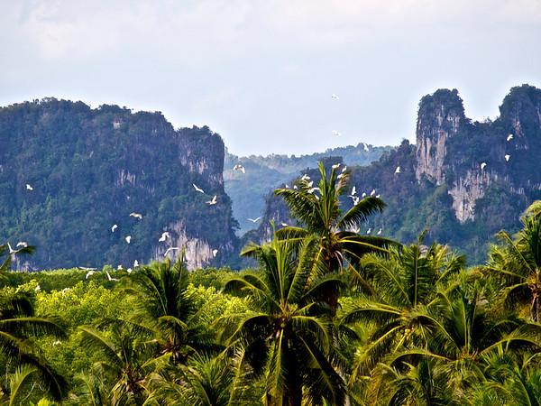 Birdland, Muang Krabi