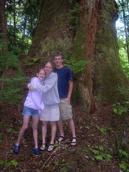 We hiked to see this huge tree.