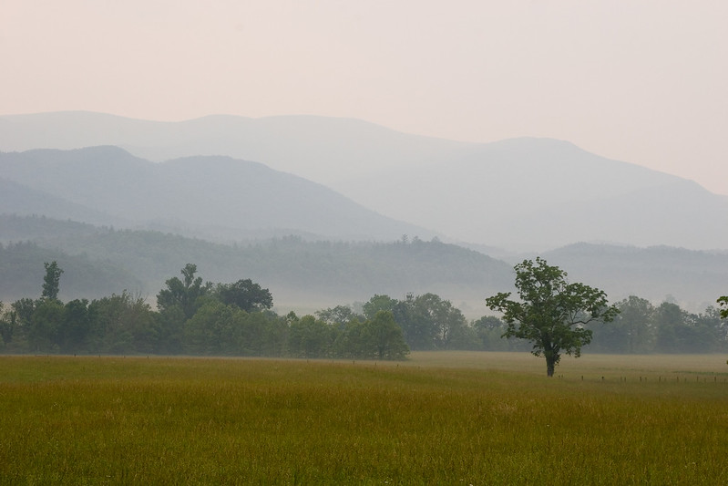 The most photographed walnut tree in the world.  In front of the John Oliver cabin, Cades Cove, GSMNP.