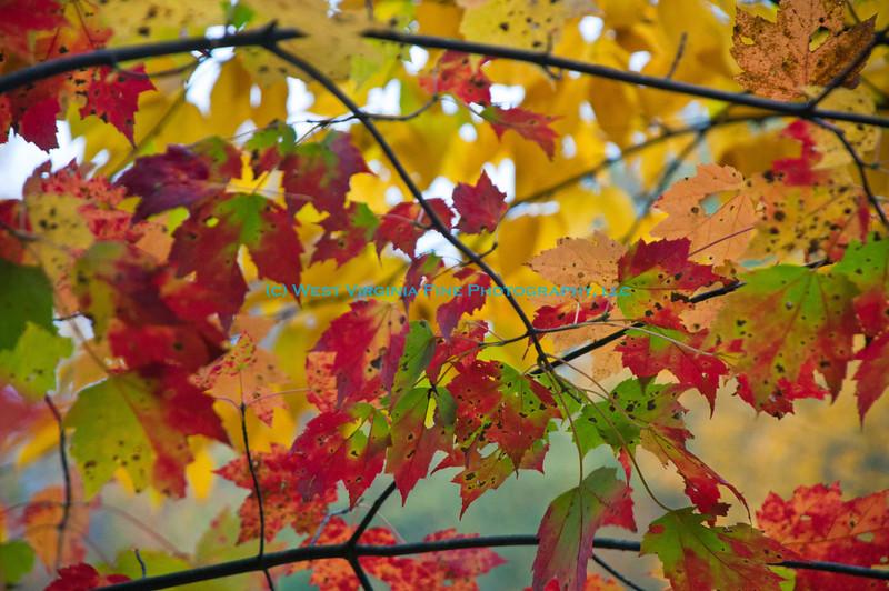 2012 10 06_2113_edited-1.jpg