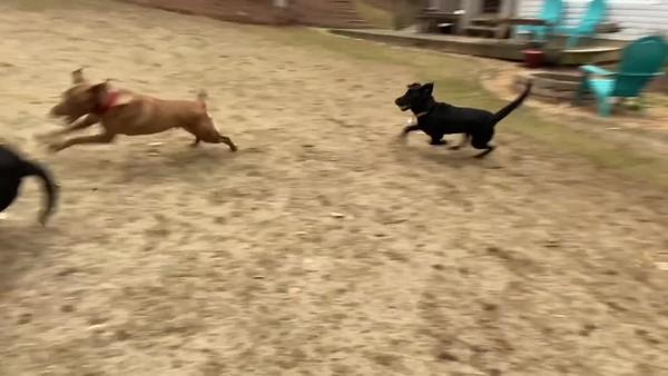 Brooke Training Videos