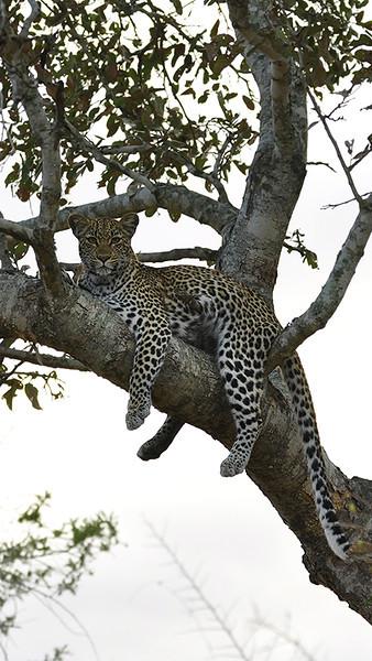 Kruger NP 2011