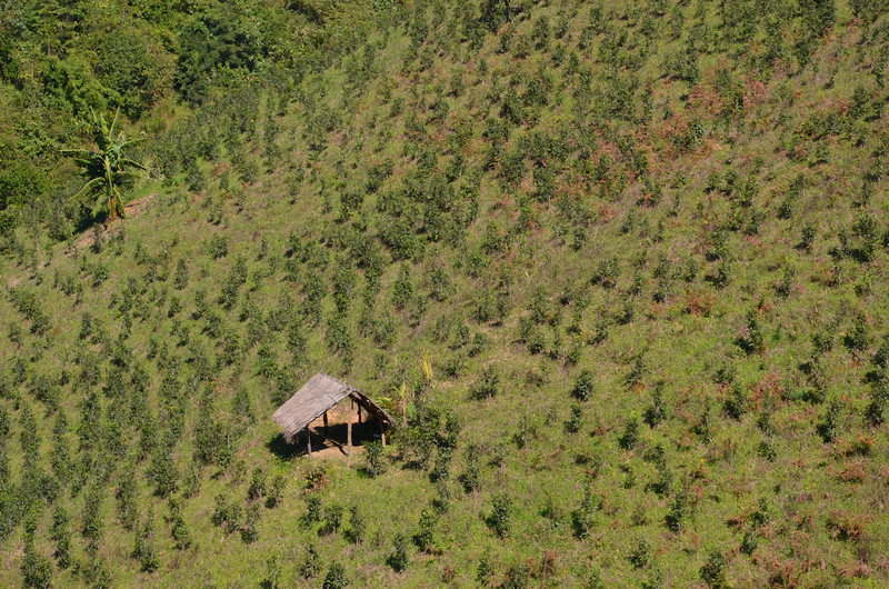 DSC_4161-tea-plantation.JPG