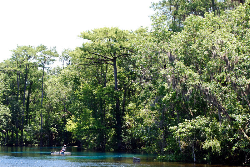2014 Silver Springs, Florida (15).JPG
