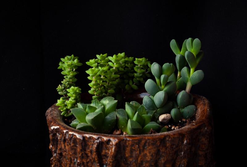 succulent-8570.jpg