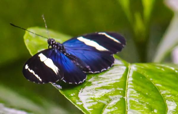 Butterfly garden, Costa Rica - December, 2012