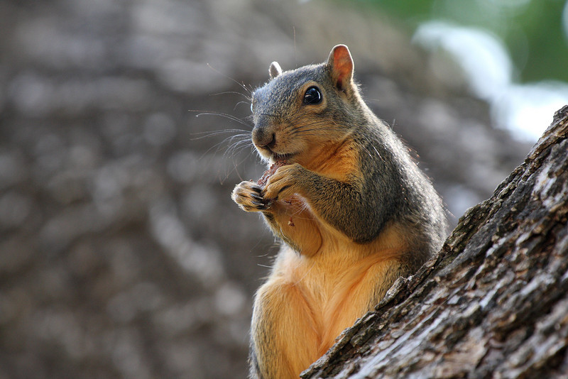 Squirrel snacking near me