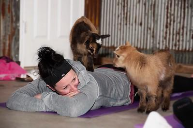 Goat Yoga in Pec.