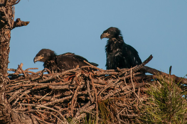 Melbourne Eagle's Nest - Feb 14, 2014