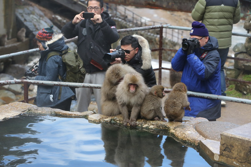 Monkeys watching photographers.....photographers photographing monkeys.
