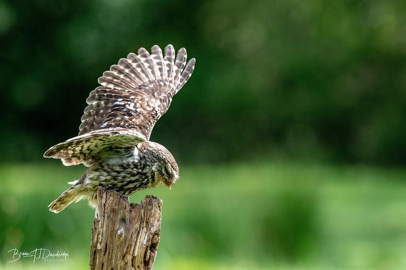 The Little Owl Shoot-6786.jpg