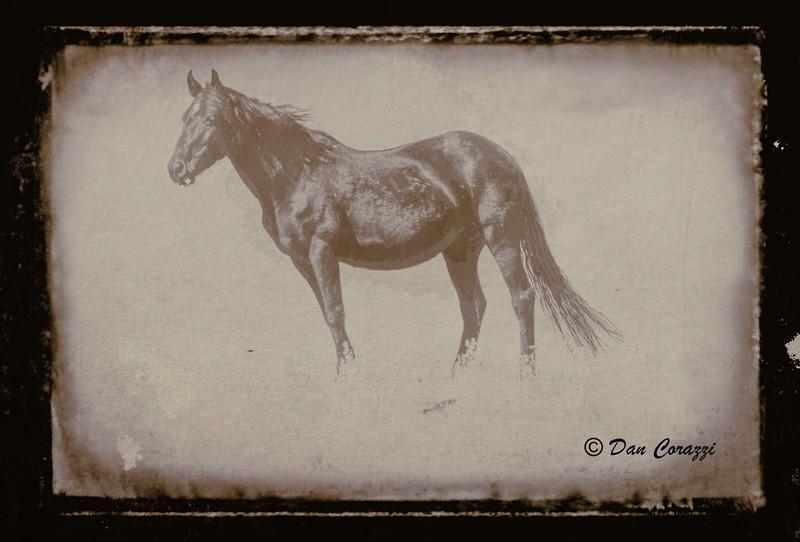 Black stallion-111234.jpg