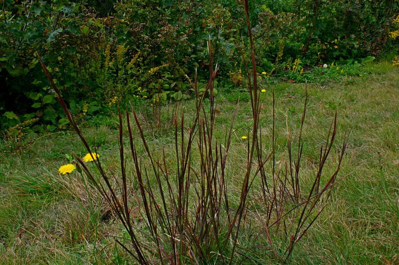 Pisgah Forest 9-30-12 103.jpg