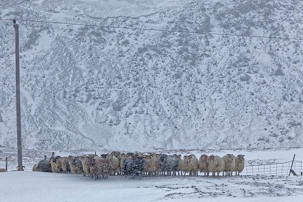 Mouton to moutons
