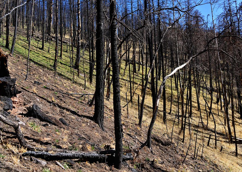 NEA_0620-7x5-Fire damage-Fire Recovery.jpg