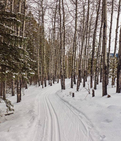 Very good ski conditions on Loggers Loop at Sandy McNabb, December 10. Single track set on a narrower trail, typical of the area.