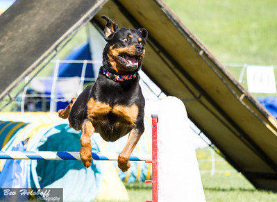 Alta Portugese Water Dog Agility trial Day 1