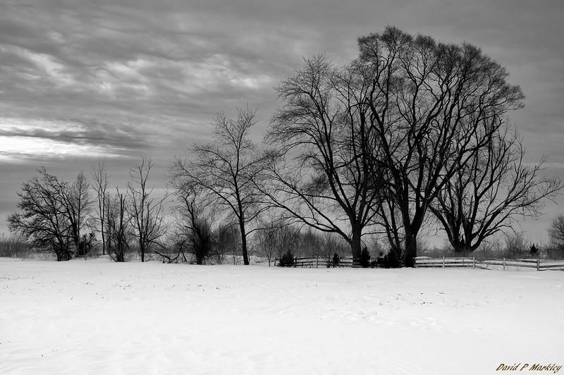 Morning Farmland