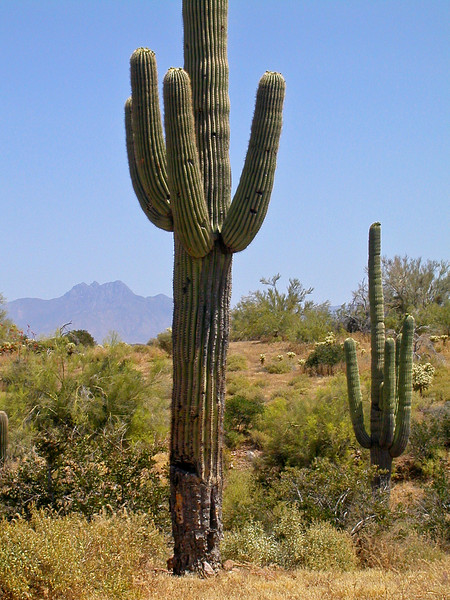 Treasure Loop Saguaro.jpg