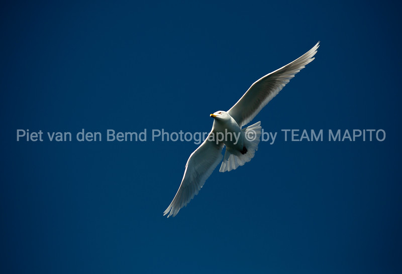 🦅Piet van den Bemd - Freelance Wildlife Ecology Manager & Photographer