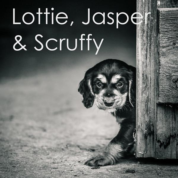 Lottie-Icons.jpg