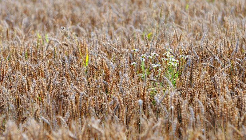 Lindeijer_2012-08-27_183631.jpg