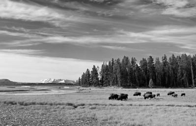 Wyoming Prints