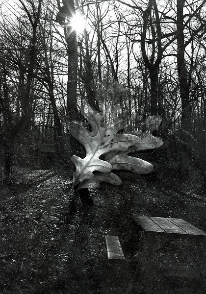 46900536_double exp oaks