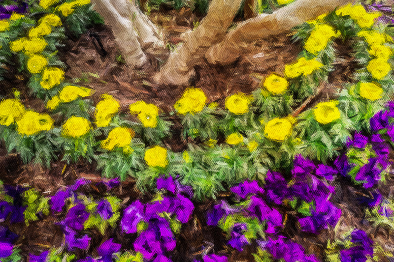 May 9 - Trees encircled by rings of yellow, green and purple.jpg