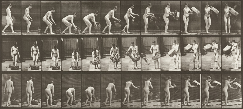 Nude woman lifting and emptying a basket (Animal Locomotion, 1887, plate 213)