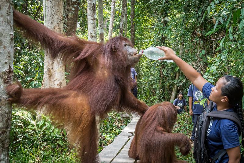 Borneo-2233.jpg