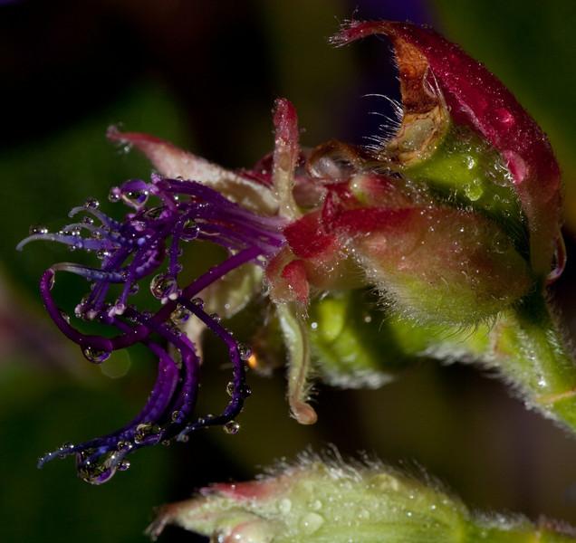 flowers-3444.jpg