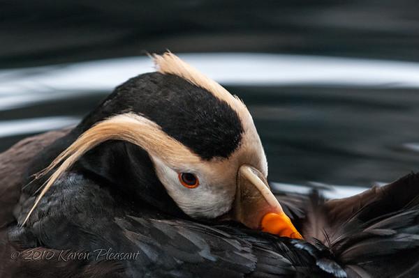 Alaska's Birds