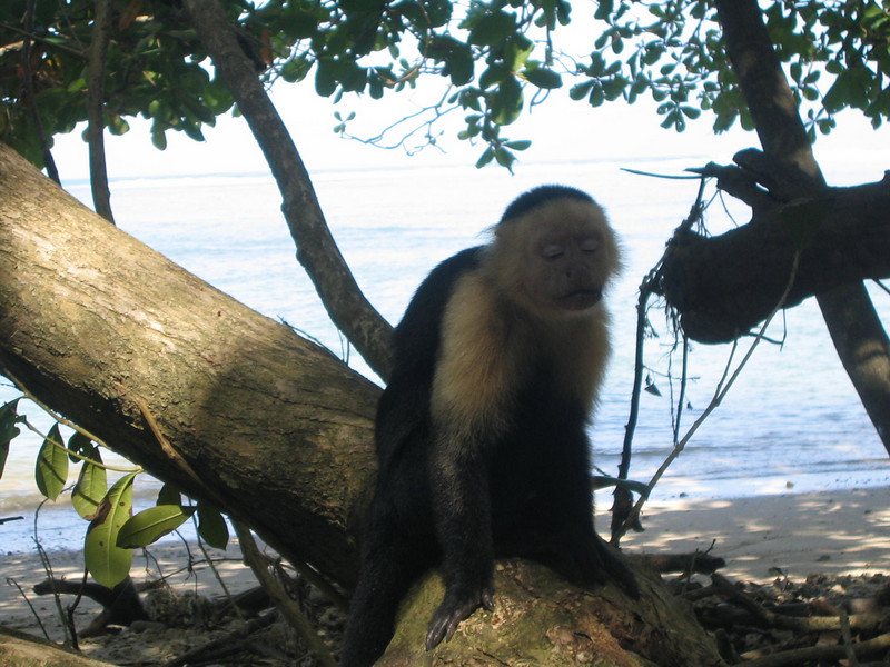 nonphotogenic monkey
