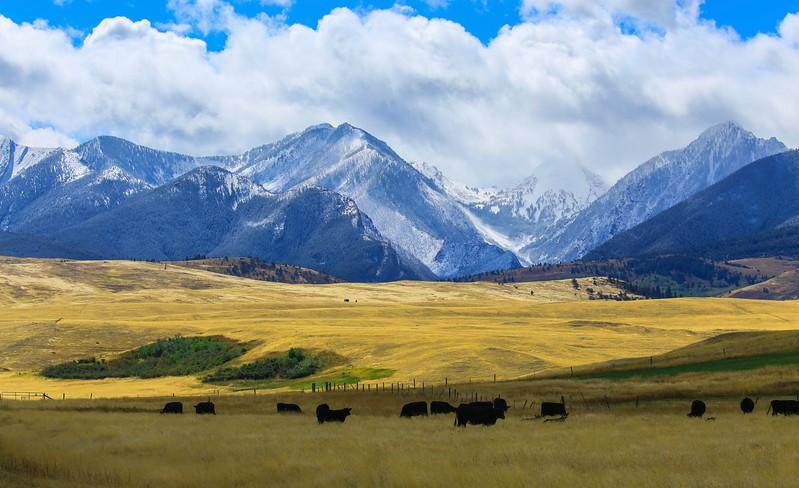 Livingston landscape 2.jpg