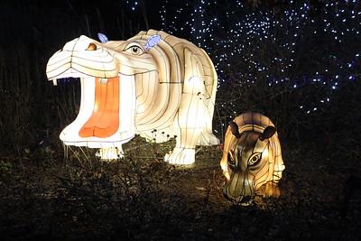 Festival of Lights - Cincinnati Zoo - 19 Dec. '17