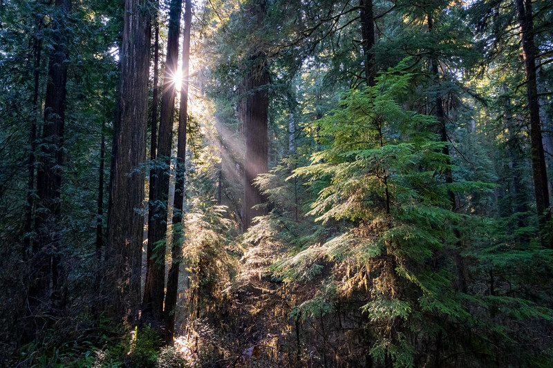 19-12-31 redwoods 0012-254.jpg