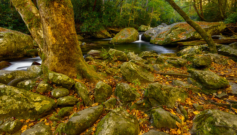 GREAT SMOKIES-BIG CREEK-0254_HDR.jpg
