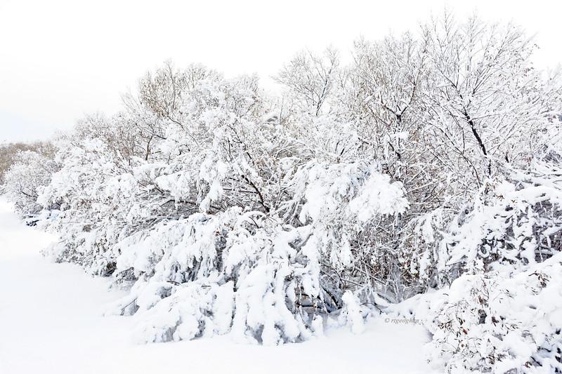 Mill Creek Marsh Shrubs Snowfall