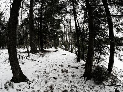 Shaver Pond, January 21, 2013
