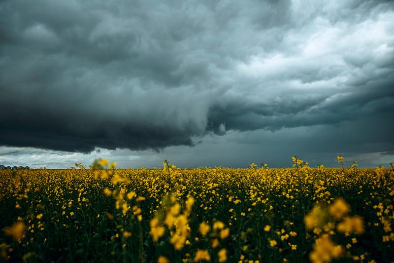 Storm_595B7149.jpg